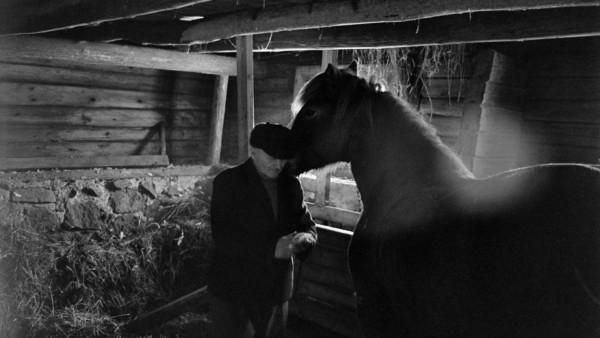 Vanha mies siisteissä vaatteissa pilttuussa hevosen kanssa