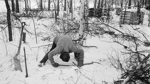 Lumisessa metsässä hattupäinen mies kumartuneena sahaamassa koivua, vieressä lapio ja kirves pystyssä lumessa, taustalla puita ja halkopinoja