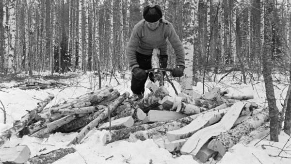 Mies kuorii kaarnaa kaadetuista puista, maassa paljon kaadettuja puita, taustalla luminen metsä