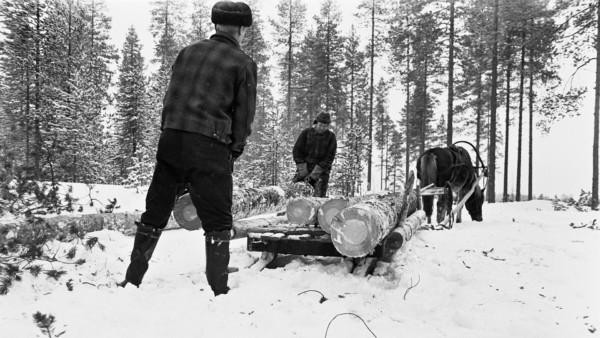 Kaksi miestä lumisessa metsässä nostamassa puunrunkoa vastakkaisista päistä hevosen vetämään puurekeen, jossa jo muutama runko, taustalla metsää
