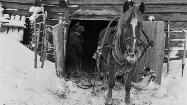 Mies suitsimassa hevosta rekeen tallin oviaukolla, maassa lunta