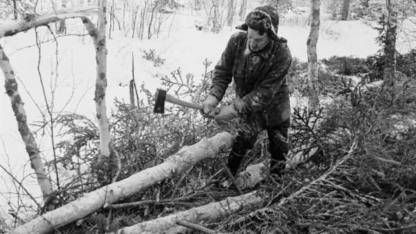 Lumisessa metsässä vanha mies poistaa oksia puun rungoista kirveellä