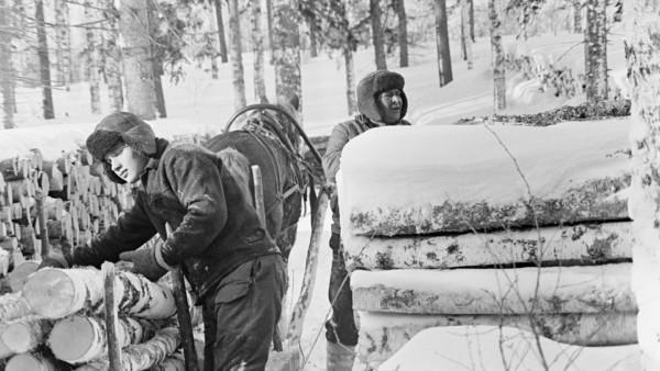 Kaksi miestä talvivaatteissa hevosen vetämän reen luona lumisessa metsässä, reessä koivunrunkoja, ympärillä runkopinoja ja metsää