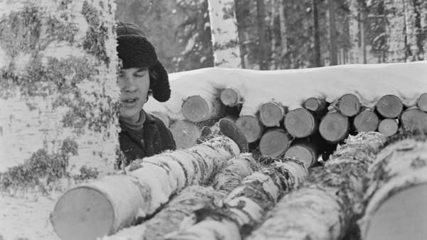 Nuori mies talvivaatteissa ottamassa koivun runkoa pinosta, edustalla pino koivunrunkoja, taustalla lumen peittämä runkopino ja metsää