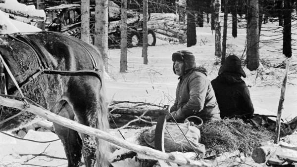 Kaksi miestä talvisessa metsässä istumassa hevosen vetämässä reessä, taustalla puita ja traktori