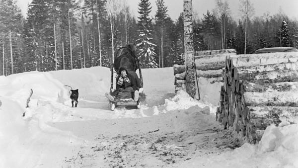 Talvisessa metsässä mies istumassa hevosen poispäin vetämässä reessä, vierellä runkopinoja, taustalla metsää