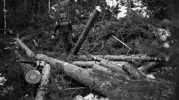 Mies kaadettujen puiden keskellä lumisessa metsässä