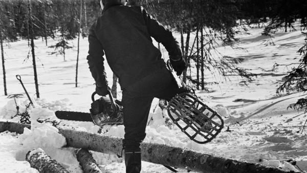 Lumisessa metsässä mies astumassa puunrungon yli, miehellä jalassa lumikengät ja kädessä moottorisaha, taustalla metsää