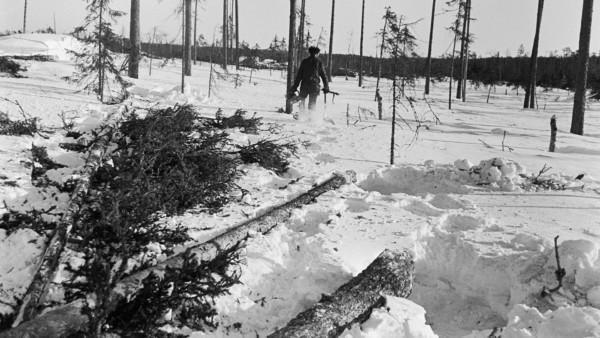 Lumisessa metsässä mies kävelemässä poispäin moottorisaha ja puutyökaluja käsissään