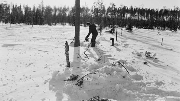 Lumisessa metsässä mies käynnistämässä moottorisahaa puun luona