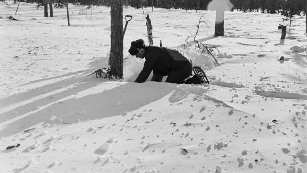 Mies lumihangessa kontallaan puun edessä lumikengät jalassa, kuulosuojaimet päässään, tausalla metsää