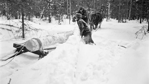 Talvisessa metsässä kaksi miestä nostamassa lumista puun runkoa toisen rungon viereen hevosen vetämälle reelle