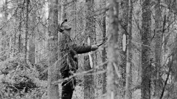 Havumetsässä puiden keskellä mies katsomassa puiden latvoja