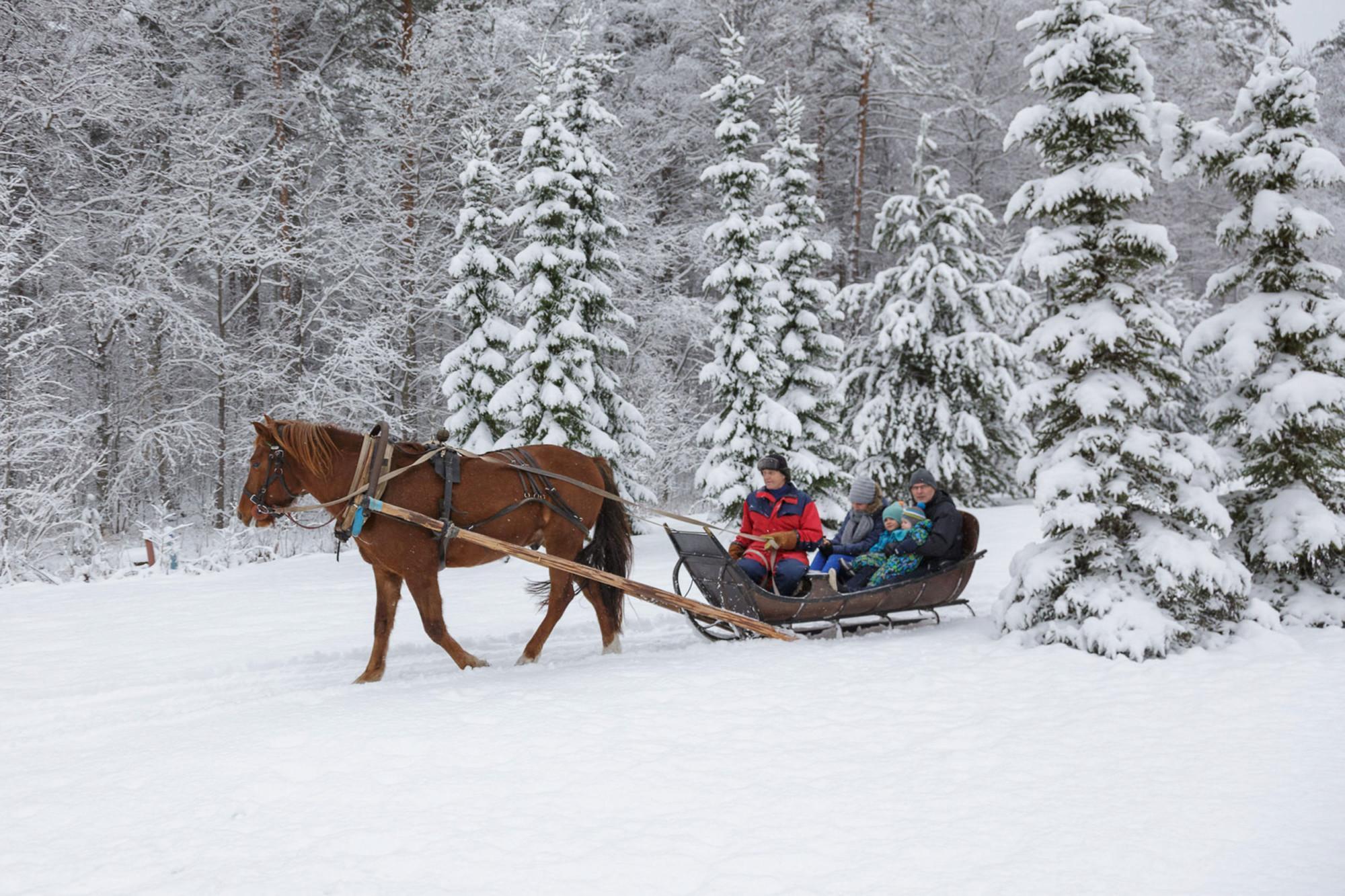 Hevonen vetää rekeä lumisessa maisemassa, kyydissä ihmisiä.