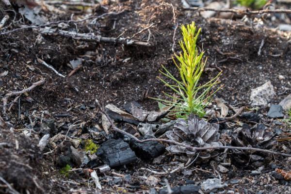 Havupuun taimi-Benjam Pöntinen-Kulota-näyttely