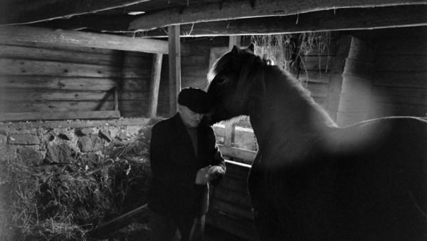 Iäkäs mies hevostaitauksessa-Erkki Heikinheimo-Miehen työ