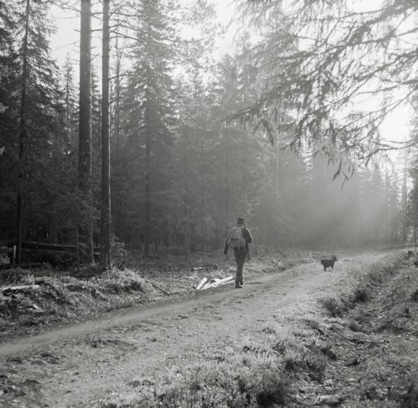 Mies ja koira metsätiellä-Pentti Väänänen-Metsä-minä-kampanja