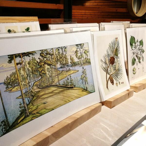 Valikoima metsäaiheisia piirroksia esillä telineissään.