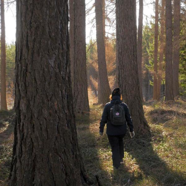 Nainen kävelee syksyisessä metsässä pipo päässä ja reppu selässä. Aurinko paistaa puunrunkojen lomasta.