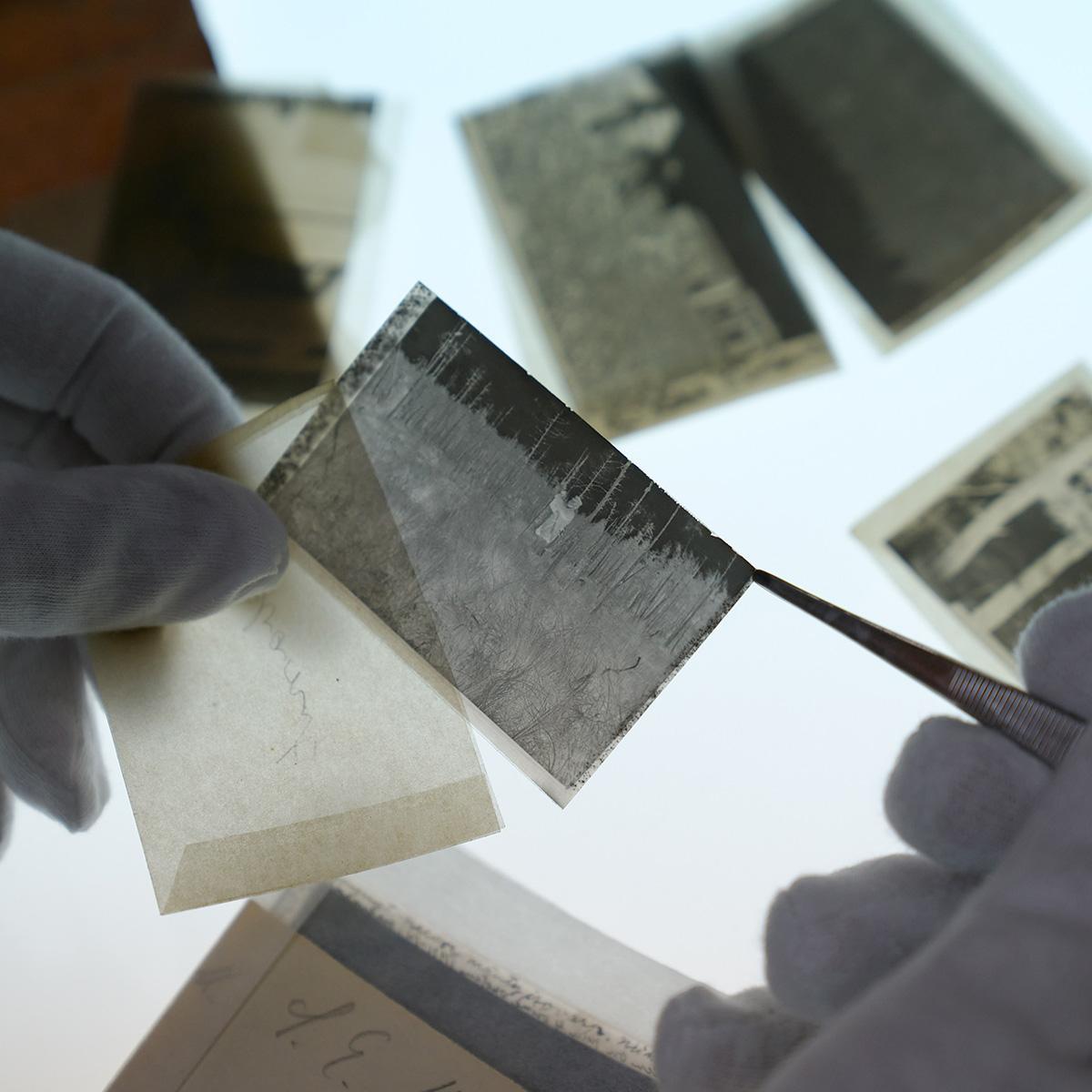 Vanhan valokuvanegatiivin käsittelyä varovasti pinseteillä ja hanskat kädessä. Taustalla valopöydällä muita vanhoja negatiiveja.