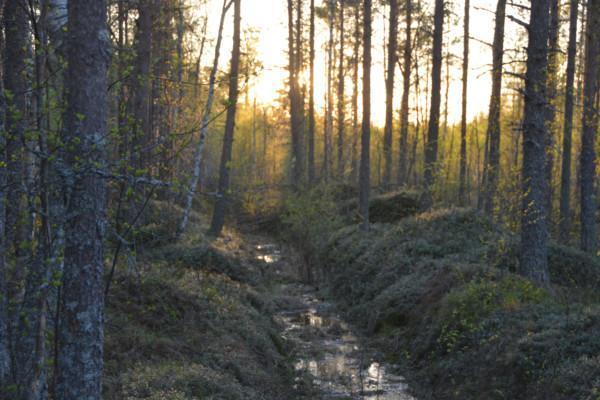 Oja metsässä, aurinko paistaa puiden välistä taustalla.